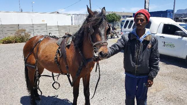 La Bella Vita Studios | Cart Horse Association | Michael & Starlight